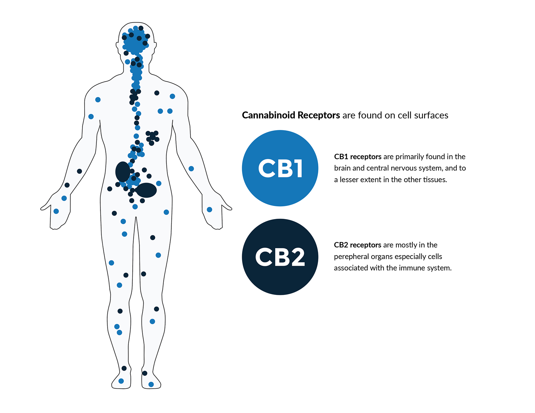 science discovery and development of cannabinoid medicine